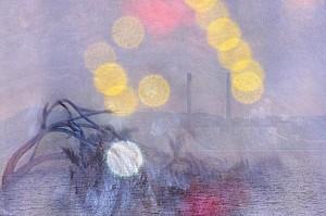 cropped-seaweed1.jpg